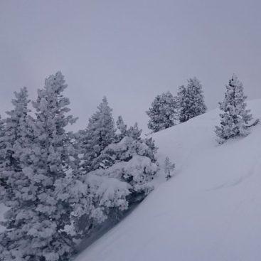 cropped-arboles-nieve.jpg